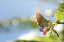 Facing the garden butterfly