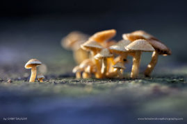 Mushrooms in the rainforest of Los Amigos Conservation Concession, Peru