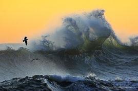 Clapotis Wave, Kohaihai New Zealand