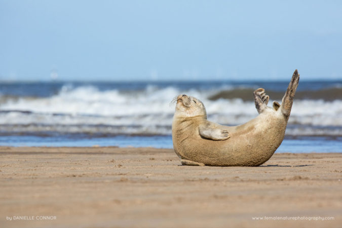 Seal Yoga