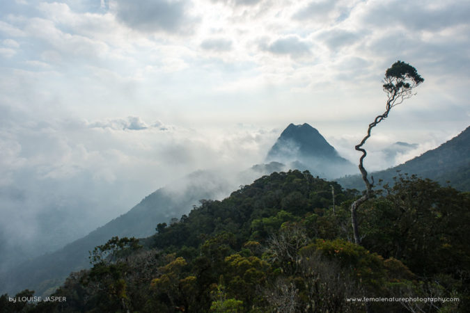 The spectacular view from Camp Simpona at dawn in Marojejy National Park