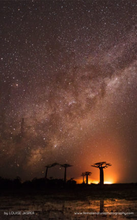 A fire blazes beyond distant baobabs under the light of the Milky Way. Morondava