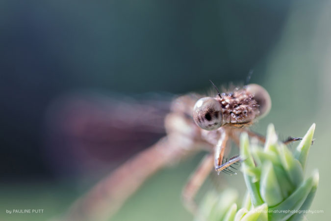 Baby dragonfly