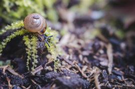 Explorer: snail on moss