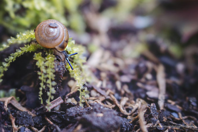 Explorer: snail on moss