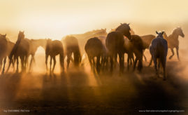 Morning Gathering - A group of horses greet the rising sun on a Tucson Ranch in Arizona