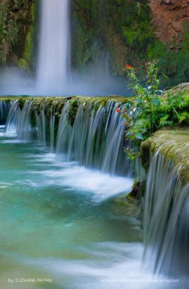 Havasupai Falls - Monkey Flowers cling to the travertine terraces at Havasupai Falls