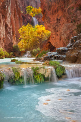 Blue and Gold - The cottonwood trees change to a glorious gold in Havasu Canyon in the fall