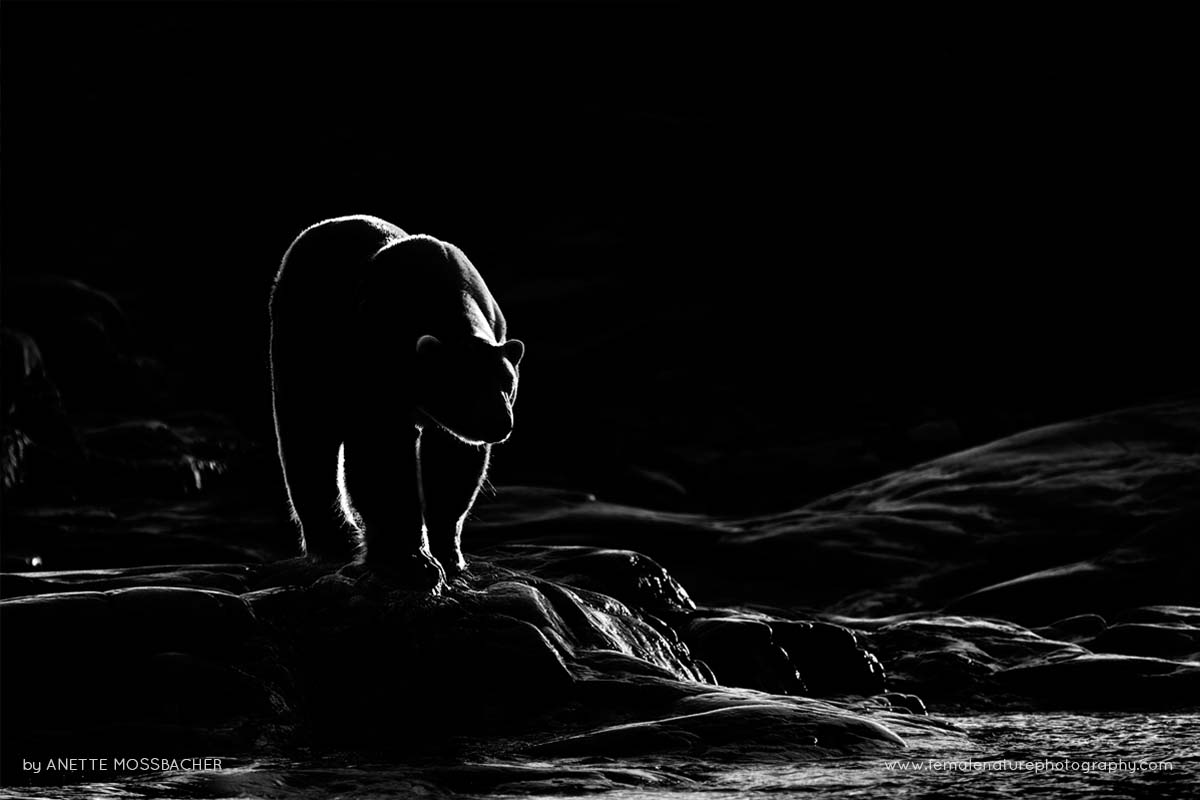 black and white photography how to make monochrome stunning