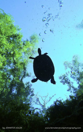 Turtle in the Treetops