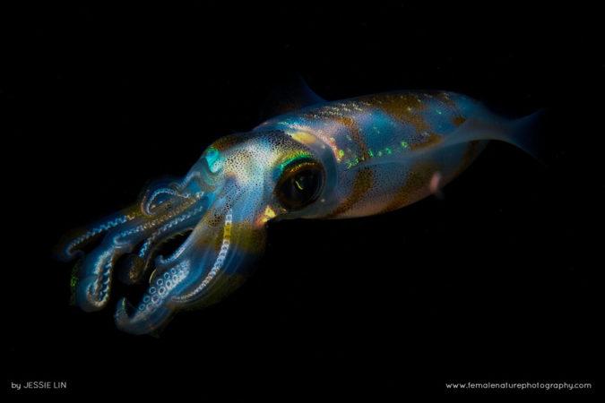 Sparkle squid at night, glitter like neon.