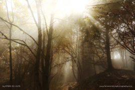 Light's Embrace ; French Alps