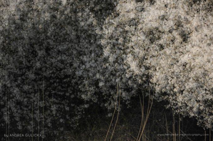 Spring movement -Multiple exposure