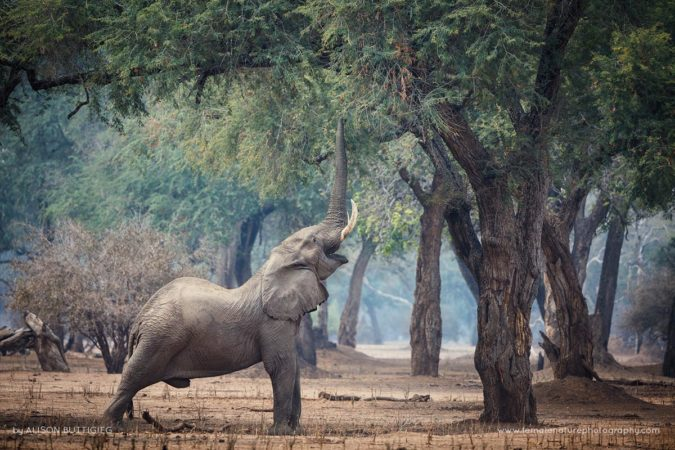 Stretch - Mana Pools - Zimbabwe