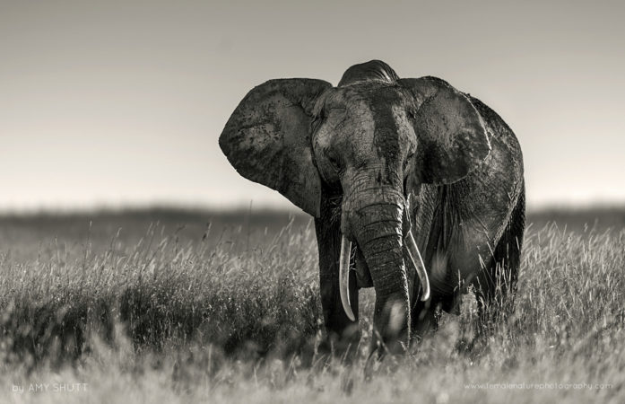 Textures - African Elephant, Maasai Mara, Africa