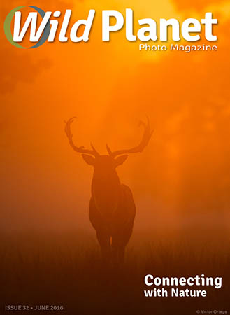 Cover-June-WPM-web-329x450