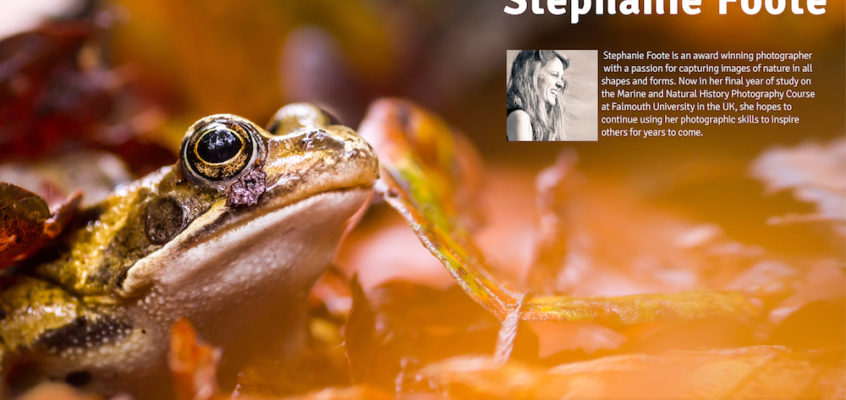 Frog in an autumnal atmosphere