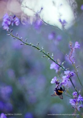 Bumble bee bokeh
