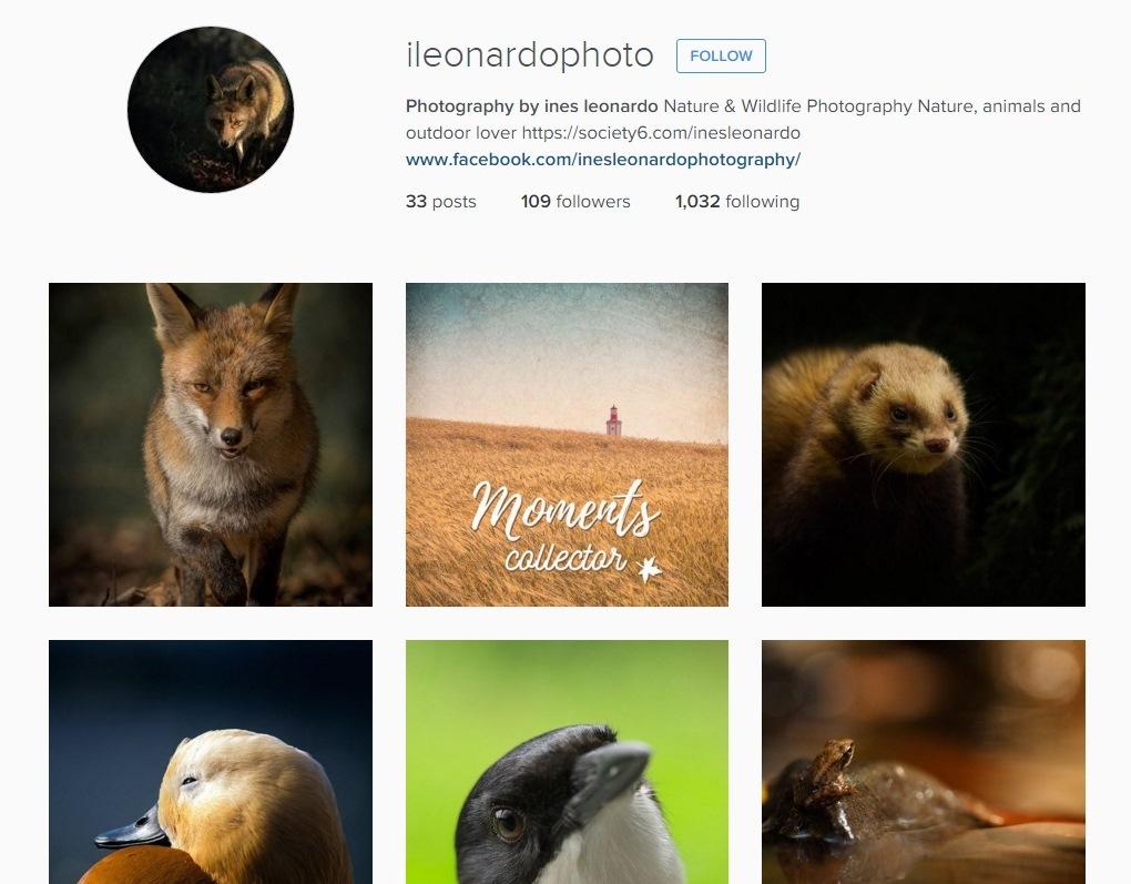 Inês Leonardo Instagram
