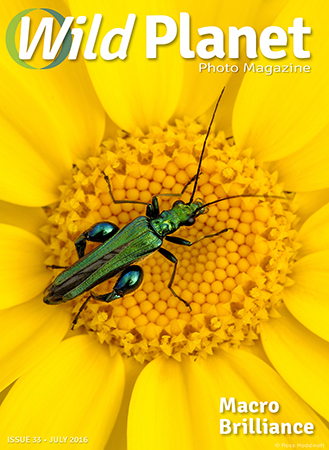 July-cover-2016_web