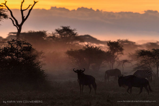 We had a beautiful Sunrise with Mist and a herd of Wildebeest and Zebra