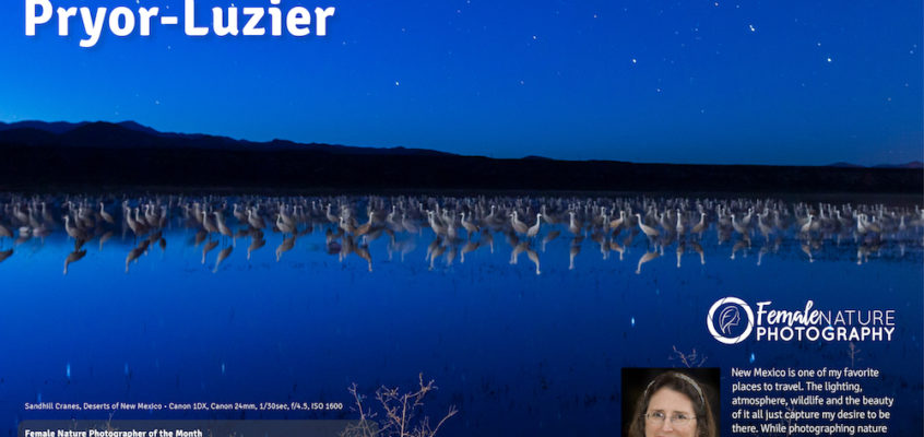 A starry night with sandhill cranes