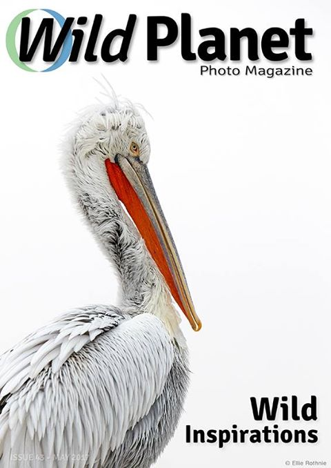 May-2017- Cover-WPM