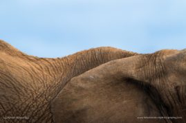 Jaci's Safari Lodge, South Africa. Elephant. I love looking at different ways of portraying the wildlife I so love, and showing a different beauty to them.