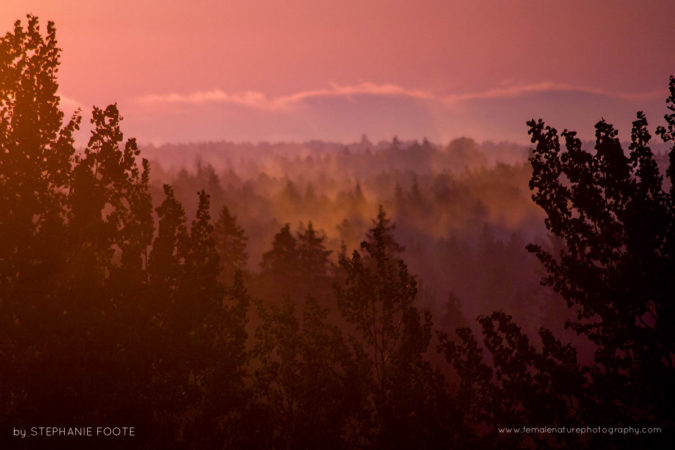 Dawn - Sunrise over a wild Estonian forest
