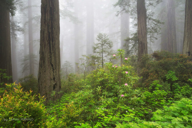 Spring in the Redwoods National Park