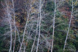 Bare trees in Yosemite National Park at the end of autumn