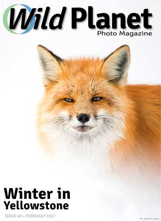 Wild Planet Photo Magazine February 2017 cover