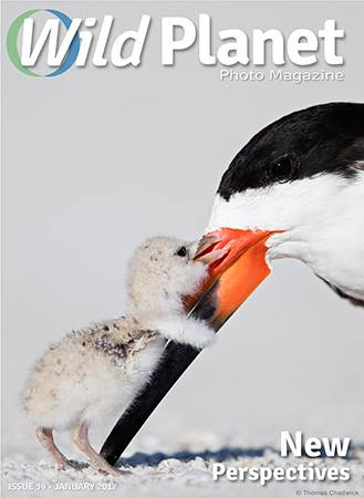 Wild Planet Photo Magazine January 2017 cover