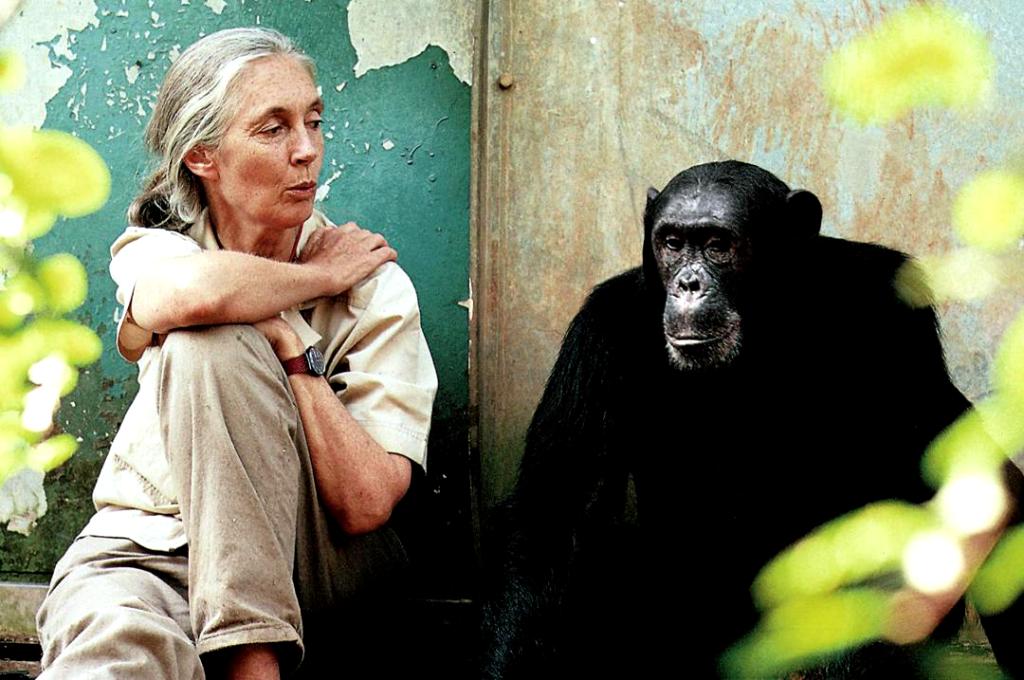 Jane Goodall-Karin