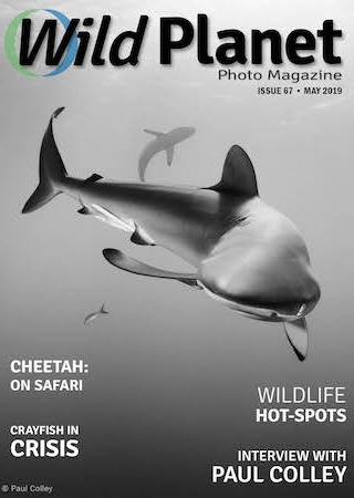 Wild Planet Photo Magazine May 2019 cover