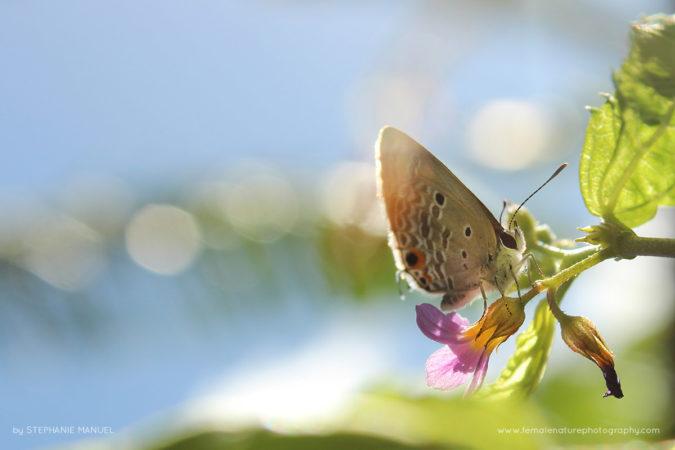 FNP_Stephanie_Manuel_garden_butterfly