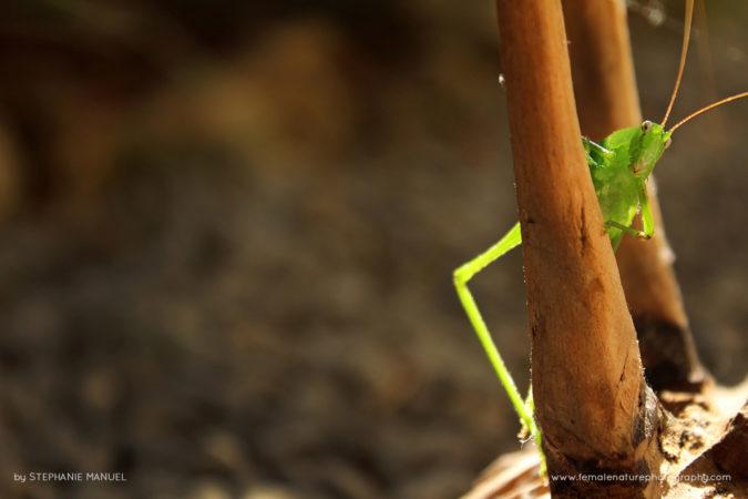 FNP_Stephanie_Manuel_funny_cricket