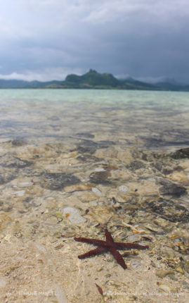 Red starfish and Lion mountain, south of Mauritius