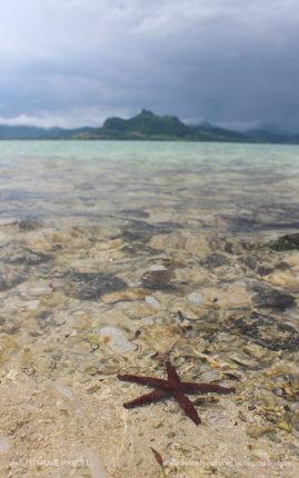 FNP_Stephanie_Manuel_red_starfish