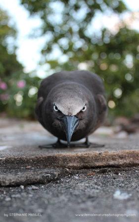 FNP_Stephanie_Manuel_angry_bird
