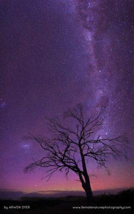 Southern Stars, Tasmania Australia