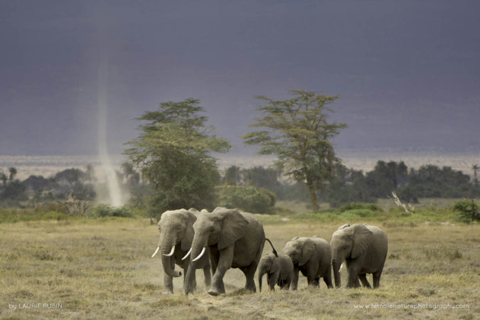 Elephants and the Dust Devil