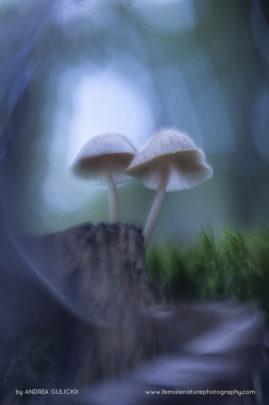 Mushrooms ocean
