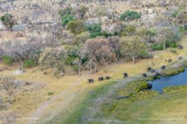 Elephants in the selinda spill way