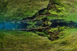 Underwater Meadows