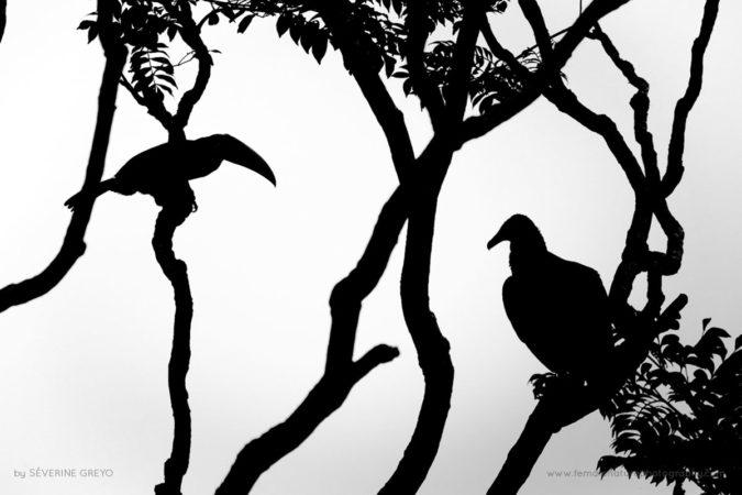 Vulture & Toucan, Costa Rica