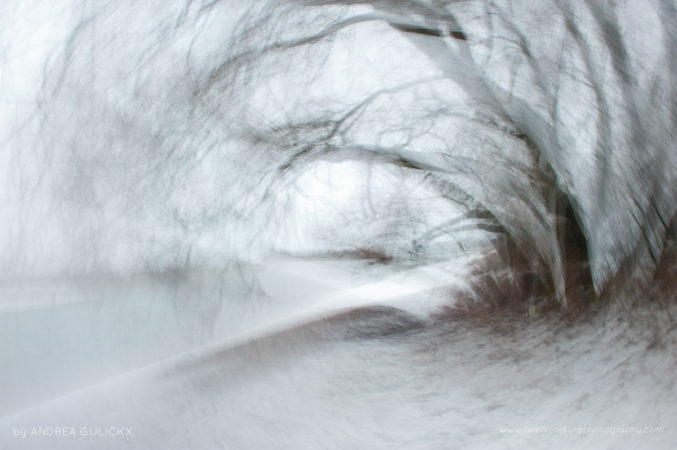 Snow Tree - ICM camera movement, long exposure, single photo.