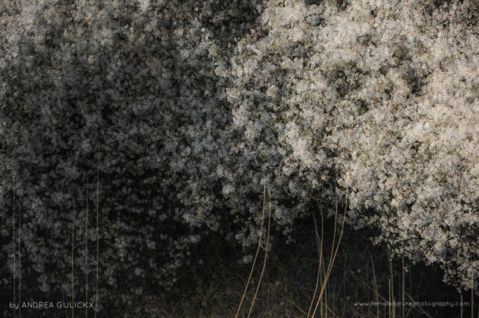 Spring movement -Multiple exposure