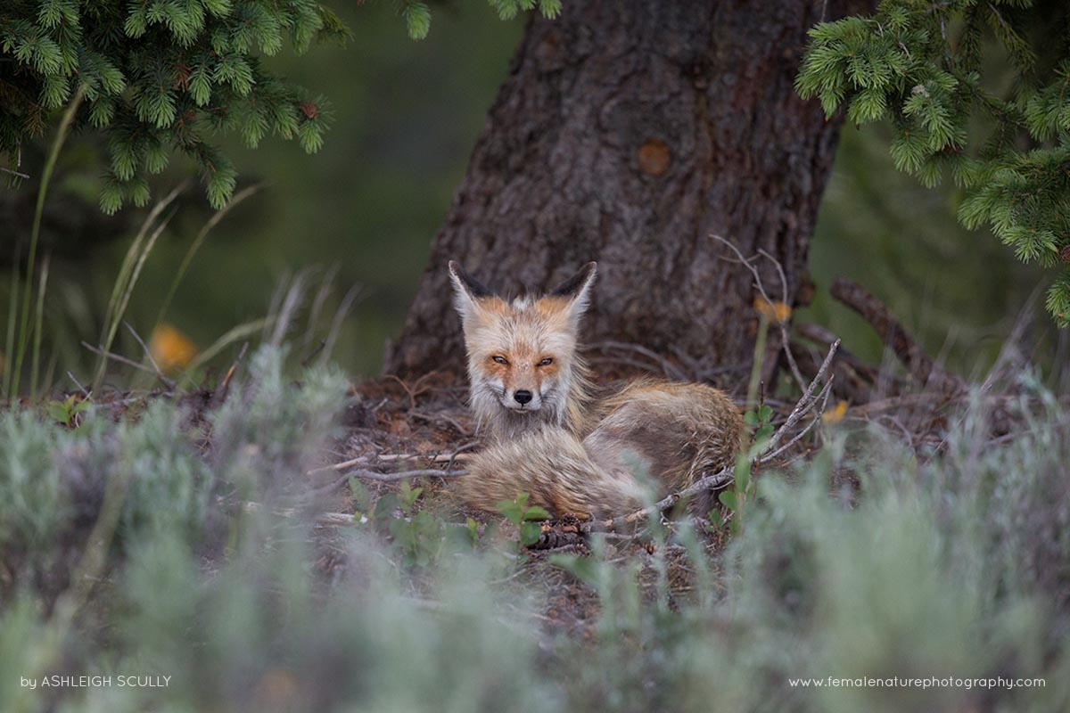 ashleigh scully � female nature photography