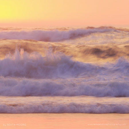 Atlantic Ocean waves turned pink at sunset and their dynamic fluid state reminded me of champagne.